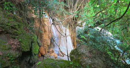 virgin forest : Mossy stones and waterfall in jungle. Lianas, vines and creeper plants in wild nature