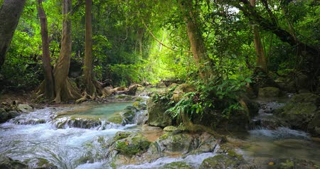 pristine : Wild nature landscape. Jungle forest and water stream