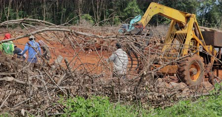 elpusztít : Timber industry logging deforestation damages wildlife nature and causes climate change and environmental disasters in region. Illegal activity in wild rainforest of South East Asia