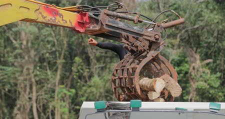 borneo : Heavy machinery unloads tree logs into truck on forest logging site in South East Asia region Stock Footage