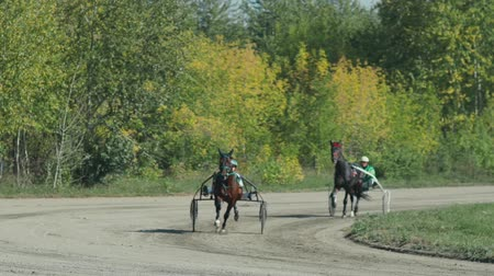 sulky : Russia Novosibirsk 2016. Harness racing. Equestrians running horses on hippodrome. French Trotter, harness racing at racecourse. Horse racing with sledge. Racecourse