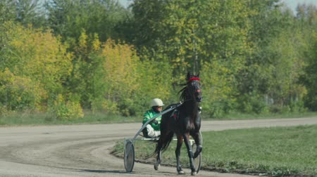 sulky : Russia Novosibirsk 2016. Harness racing. Horse show. Equestrians running horses on hippodrome. Horse racing, French Trotter, harness racing at racecourse. Horse Racing. Racecourse. Stock Footage