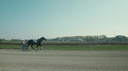 sulky : Russia Novosibirsk 2016. Harness racing. Horse show. Equestrians running horses on hippodrome. Horse racing with sledge. Racecourse. Favorite in horse racing. Dark-horse