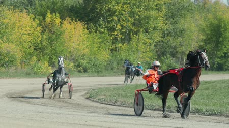 sulky : Russia Novosibirsk 2016. Many horses with carts. Jockey in wagon. Harness racing. Horse show. Equestrians running horses on hippodrome. Horse racing with sledge. Horse Racing. Racecourse.
