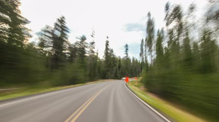 droga : Driving time lapse through a beautiful forest in oregon.