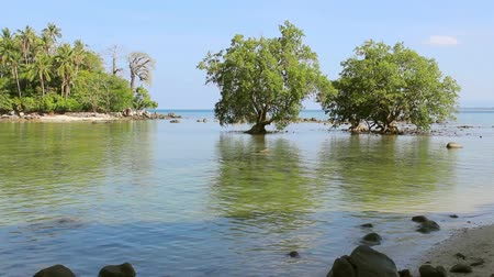 mangue : Mangrove in the area of low tide. Southeast Asia Vídeos