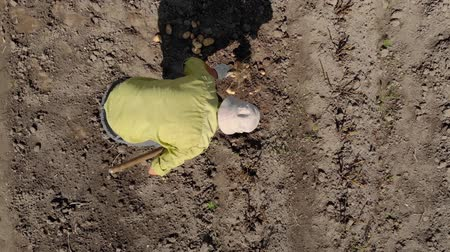 dacha : From the height we see how a person digs potatoes on a small field Stock Footage