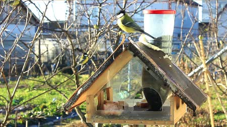feeder : Titmouse in anticipation of the cold