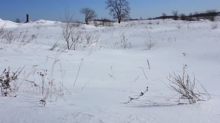 Dry grass sways in the snow. The height of winter Stock Footage
