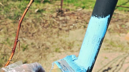 Finer day. Brush and painting blue metal on metal espalier Iin garden Stock Footage
