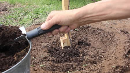 Farmer tied to a support tree sapling and fertilized with compost.  April Stock Footage