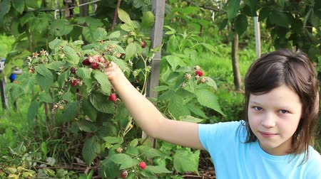Teen girl in garden regales on raspberries, picking them from bush Stock Footage