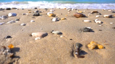 baltık denizi : stones on sand near seaside Stok Video