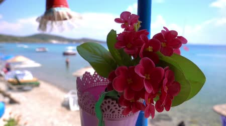 герань : Imitation Flowers in Pot and Holiday Seaside Стоковые видеозаписи