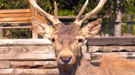 копытный : Deer Animal Face in the zoo