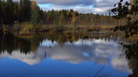boggy : Vivid swamp in wild taiga tilt up