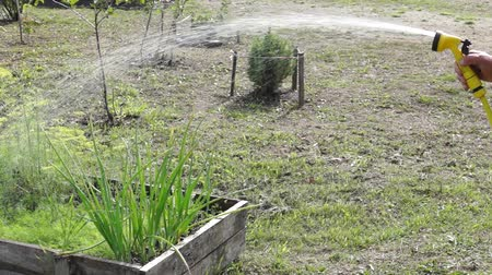 yama işi : Watering vegetables patch with watering hose Stok Video