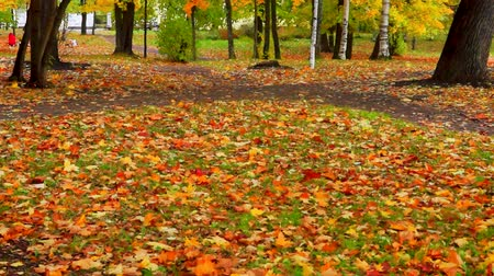Autumn foliage map tilt up