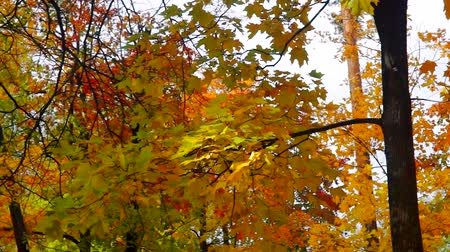 Leaves in wind in autumn