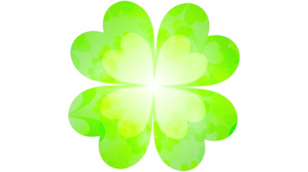 jetel : Clover leaves loop bright background Dostupné videozáznamy