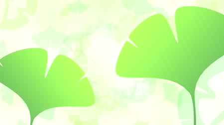 neve : Ginkgo leaves loop bright background