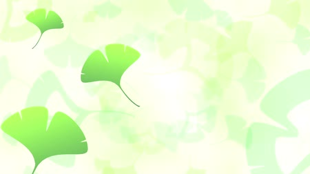 caido : Ginkgo leaves loop bright background