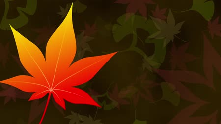 red maple : Maple Ginkgo leaves loop dark background Stock Footage