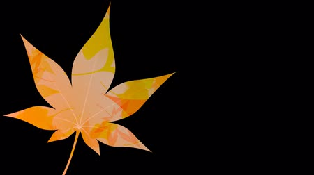 title : Maple Ginkgo leaves loop alpha channel