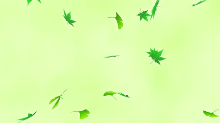 низкий : Loop vertical fast rotation maple ginkgo bright background