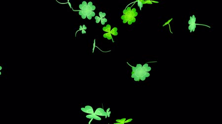 jetel : Loop vertical late rotation Clover leaves alpha channel