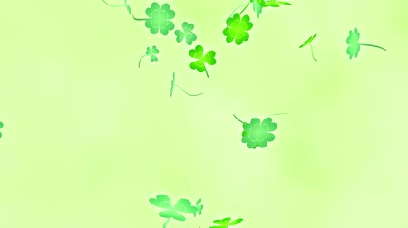 Loop vertical late rotation Clover leaves bright background Dostupné videozáznamy