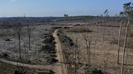 лесное хозяйство : Deforestation aerial photo. Destroyed forest for harvesting timber