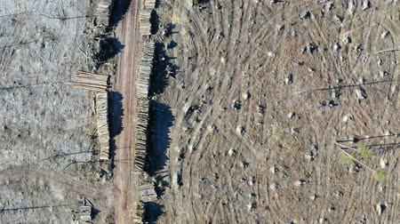 лесозаготовки : Deforestation, logging, environmental destruction. Aerial view from drone Стоковые видеозаписи