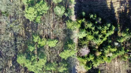dron : Aerial view of wonderful forest with multicolored trees in Poland