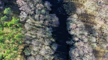 wasteland : Aerial view of strange swamps and river in Poland Stock Footage