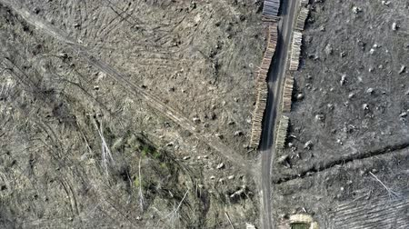natural resource : Deforestation, logging, environmental destruction. Aerial view from drone Stock Footage