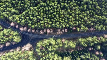 drive through : Aerial drone view of forest and road in sunny day