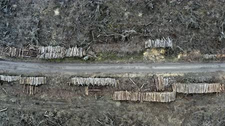 лесозаготовки : Deforestation of forest after storm, aerial view from drone