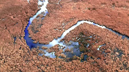 swamp : Small blue river and brown swamps, aerial view Stock Footage