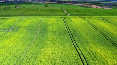 kolza tohumu : Green rape fields in Poland in spring, aerial view