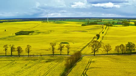 rape oil : Yellow rape fields and white wind turbine in the spring, Poland, aerial view