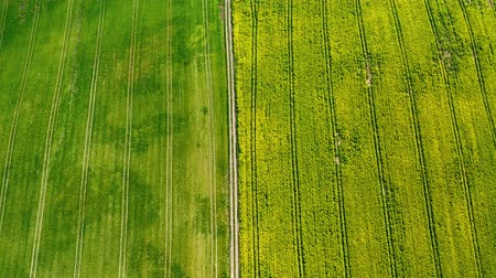 repce : Flying above blooming yellow rape fields in spring, Poland Stock mozgókép
