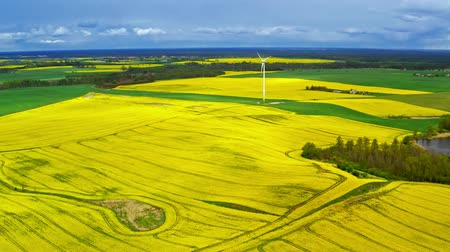 repce : Big blooming yellow rape fields and white turbine from above, Poland