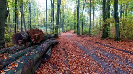 raios de sol : Wonderful footpath full of leaves and old trees in the autumn forest, Europe