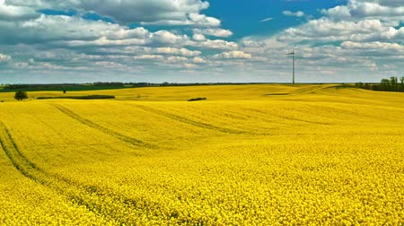 rape oil : Flying above yellow rape fields and wind turbine, Poland Stock Footage