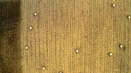 rotoballe : Field with hay sheaves from above, Poland
