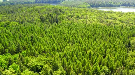 dron : Aerial view of Green forest in summer, Poland Wideo