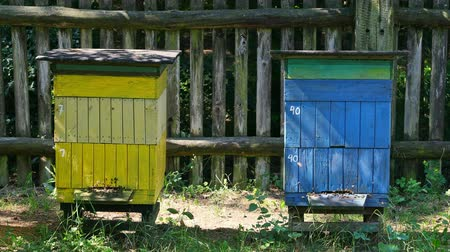 arı kovanı : Wooden beehives with bees, Poland in summer