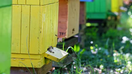 медовый : Colorful and wooden beehives in countryside, Poland in summer