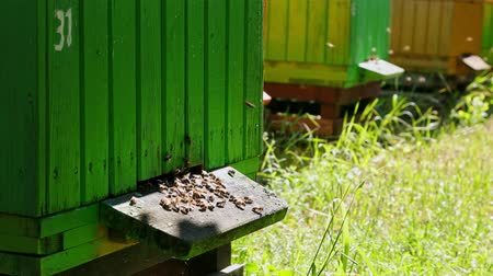 honeybee : Closeup of green beehives in summer garden, Poland Stock Footage